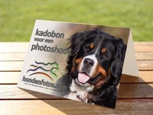 kadobon_photoshoot_hond_groot